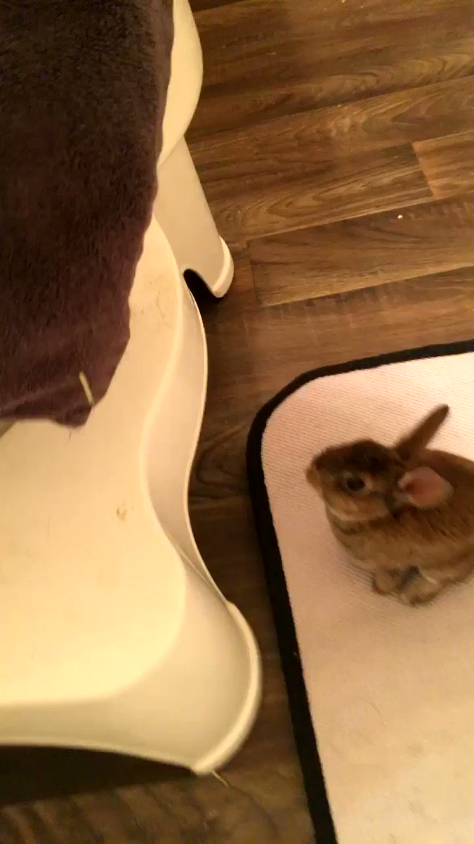 I'm just trying to take a bath and my rabbit keeps trying to jump in the tub https://t.co/xPlINJKGgs