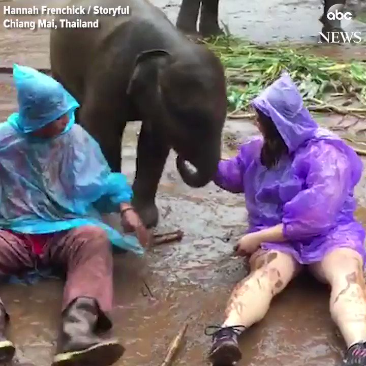 You might be happy – but are you rolling around in the mud with a baby elephant happy? https://t.co/F5Jtt2P78Z https://t.co/CcDvhlFhXS
