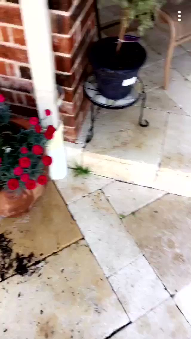I've have yet to finish watering my plants �� https://t.co/UikjA9UPzH