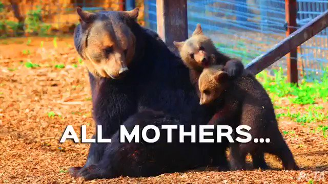 RT @peta: A mother's love is like no other ❤️ Happy #MothersDay to ALL the moms out there! https://t.co/8yRmV1Ifrk