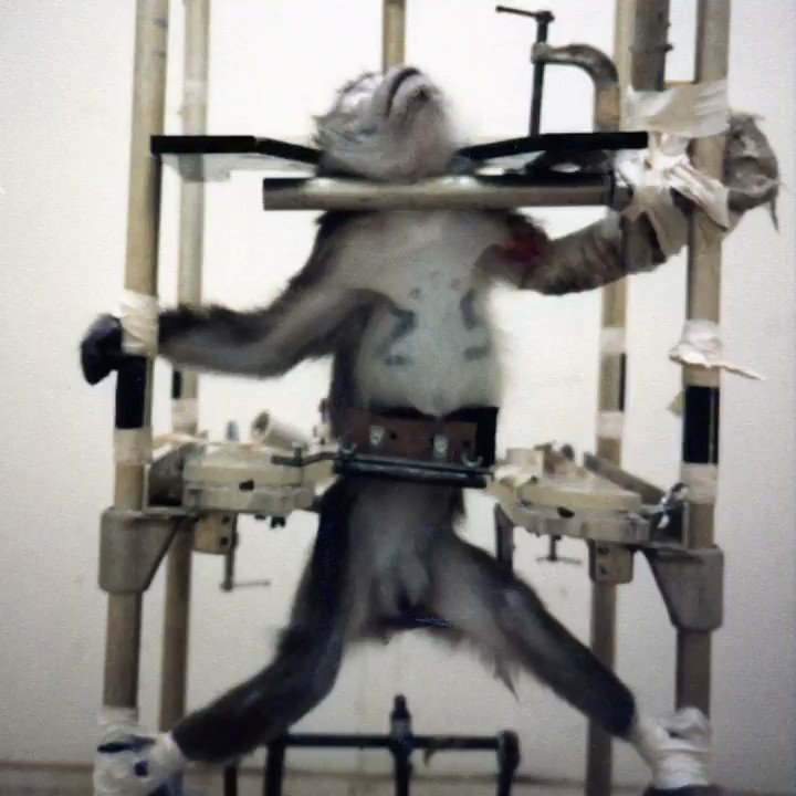 RT @peta: Have you seen all the horrific torture devices used on animals in labs? End the torture! https://t.co/0xVzvWiA9D