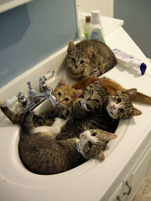 顔を洗おうとしたら、このあり様wwww あーあwww http://t.co/PtQy2hUG