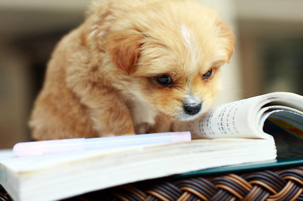 Puppy, studying. http://t.co/MQ9a81l4