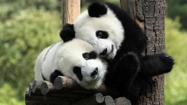 Ik knuffel je wel (: http://t.co/fRktyO2u