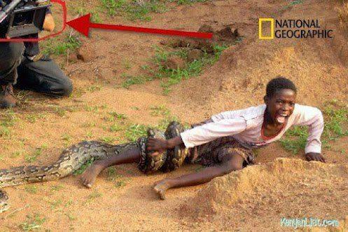 #YouAreLocalIf Û tink that snake won't kill Û like the girl thought http://t.co/dHxRlxWv