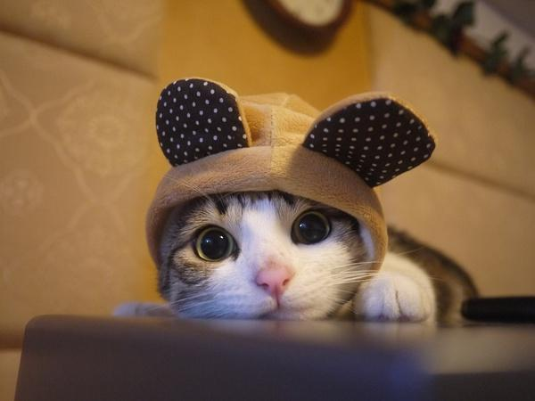 This cat is watching you read this tweet. http://t.co/PAEMCef2