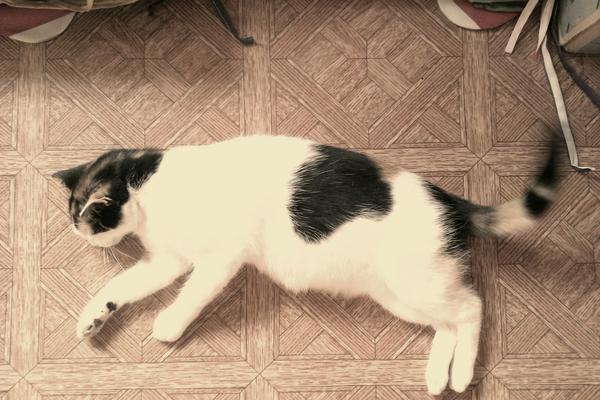 Kirill (@KirillCOOL): Puma http://t.co/HI0fLm2h