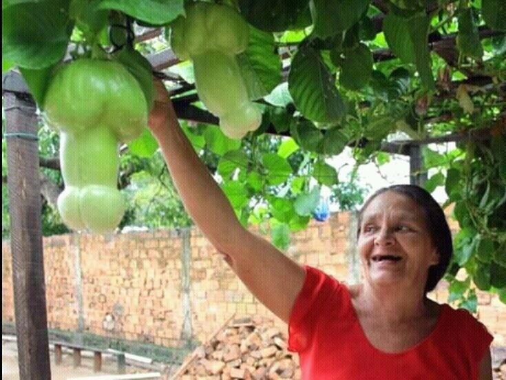 Ustedes recuerdan los cultivos verticales que prometió Candanga? He aquí una socialista recogiendo la cosecha. http://t.co/0JPLfOzz