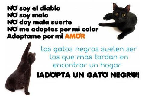 ADOPTA sin discriminar! http://t.co/xzkftOqL