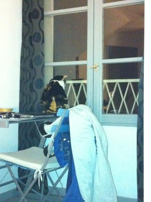 Mademoiselle fait le guet, et ce tous les soirs. http://t.co/VNs2JPcT
