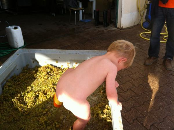 Jeremy Seysses (@JeremySeysses): We crush the whites by foot before pressing. Note they are crushed by naked virgins, something few wineries still do. http://t.co/aTEpglet