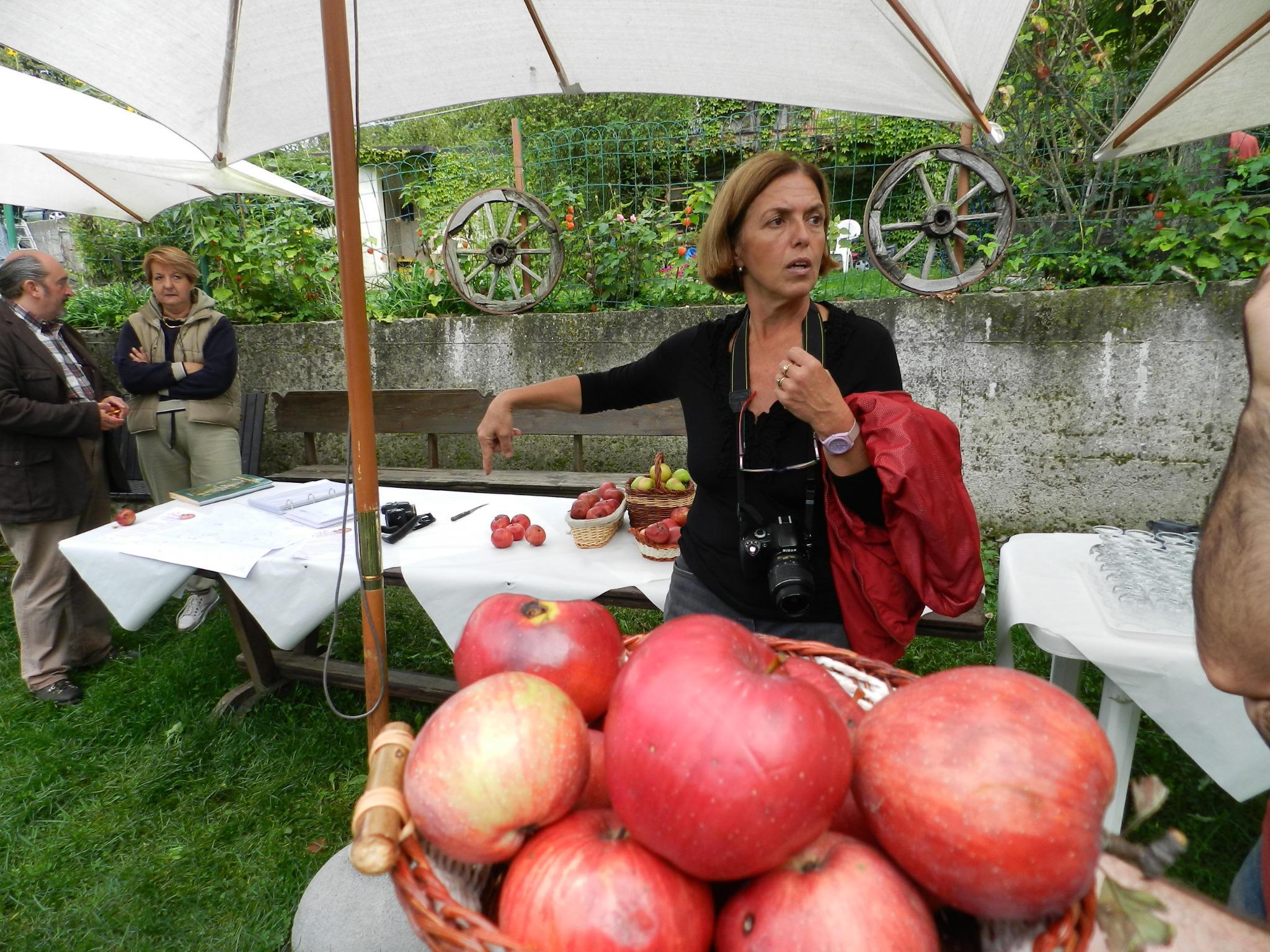 Oggi presentazione stampa progetto valorizzazione della antica Mela Cabellotta c/o Agriturismo Agrinatura Valbrevenna http://t.co/841TFek4