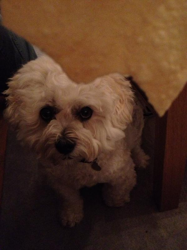 Paul C (@channp): I've never known a dog be so obsessed with poppadoms! http://t.co/1ORhbZgc
