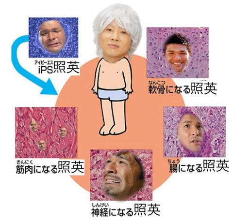 test ツイッターメディア - 川越シェフがiPS細胞を使って照英治療している画像ください https://t.co/Q2gn3bNaXk