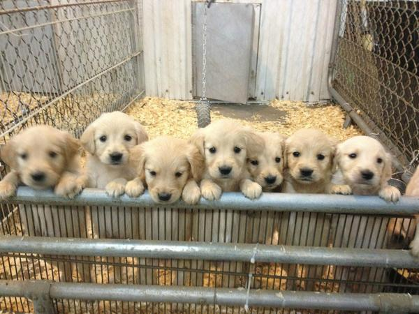 You get a puppy and you get a puppy and you get a puppy! Everybody gets a puppy! http://t.co/yuxNlfNM