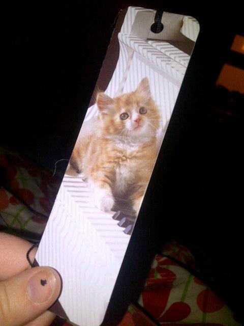 Cat bookmark c: http://t.co/h7GIAJiS