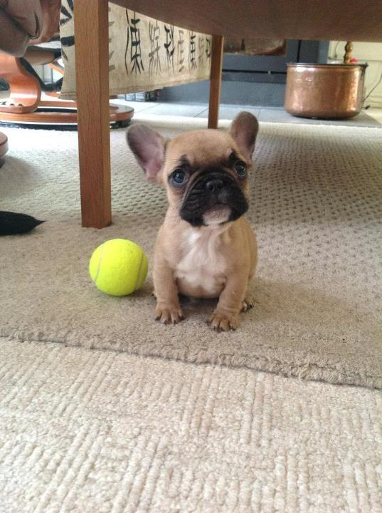 Puppy, demonstrating a complete inability to play fetch. http://t.co/l4A1XhIx