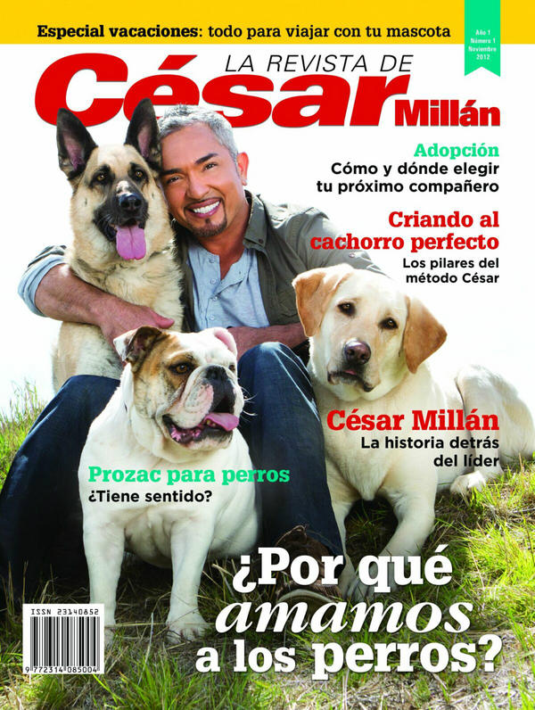 Introducing A Cat To A Dog By Cesar Millan