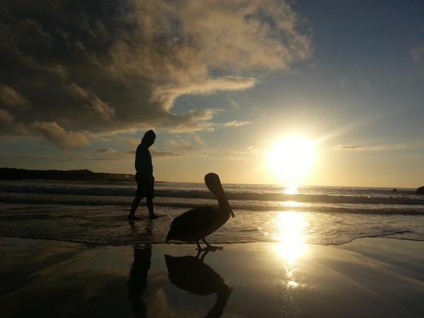 갈라파고스... 페리카나와 같이 걸을수있는 아름다운곳... http://t.co/bNINuuXW