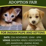 """Adopt frm 80Indian pups kittens 25nov 10-6 Bandra Hindu Assn Hall opp Amarsons LnkgRd Bandra http://t.co/5HKxNhiN"""