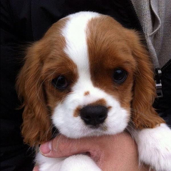 Hey, this is crazy, but here's a puppy, so pet it maybe? http://t.co/AqLRWCqP