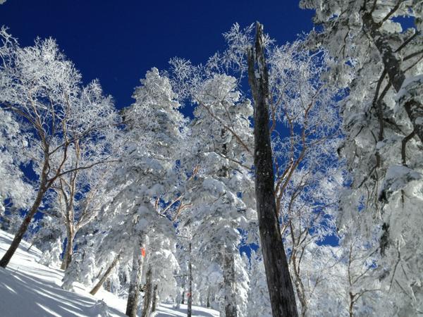 高橋亜矢 (@yamokorori): 西穂山荘登りの樹氷の森。クリスマス寒波がもたらしてくれたプレゼント! http://t.co/YMvPuzl2