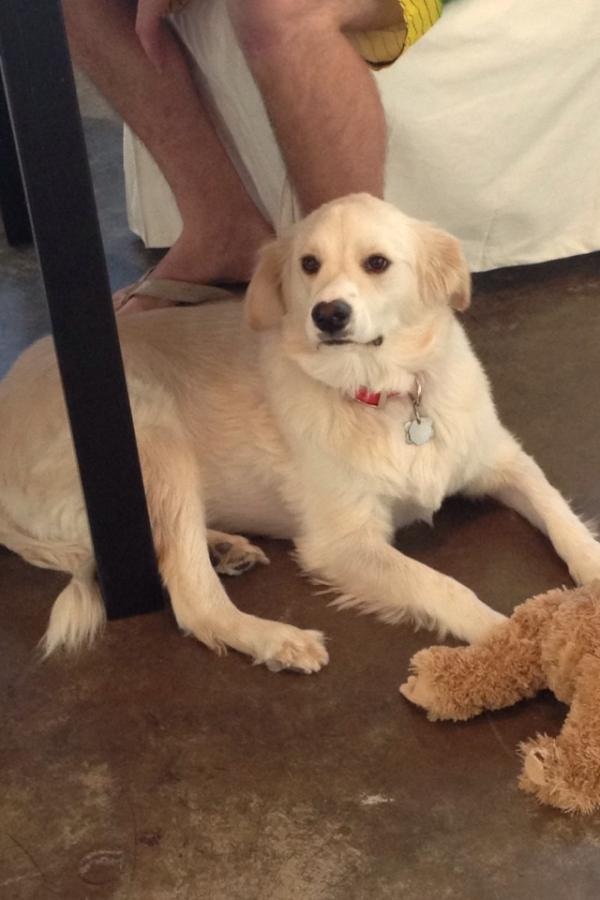 Dallas people: LOST DOG: Ella  She got out in University Park. If you see her call 214.202.7172 http://t.co/UHRdkCgA