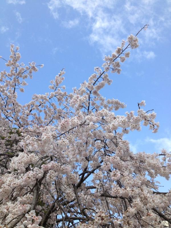 片桐功敦 (@mondebooks): 明日から銀座で桜をいける。そのま...  明日から銀座で