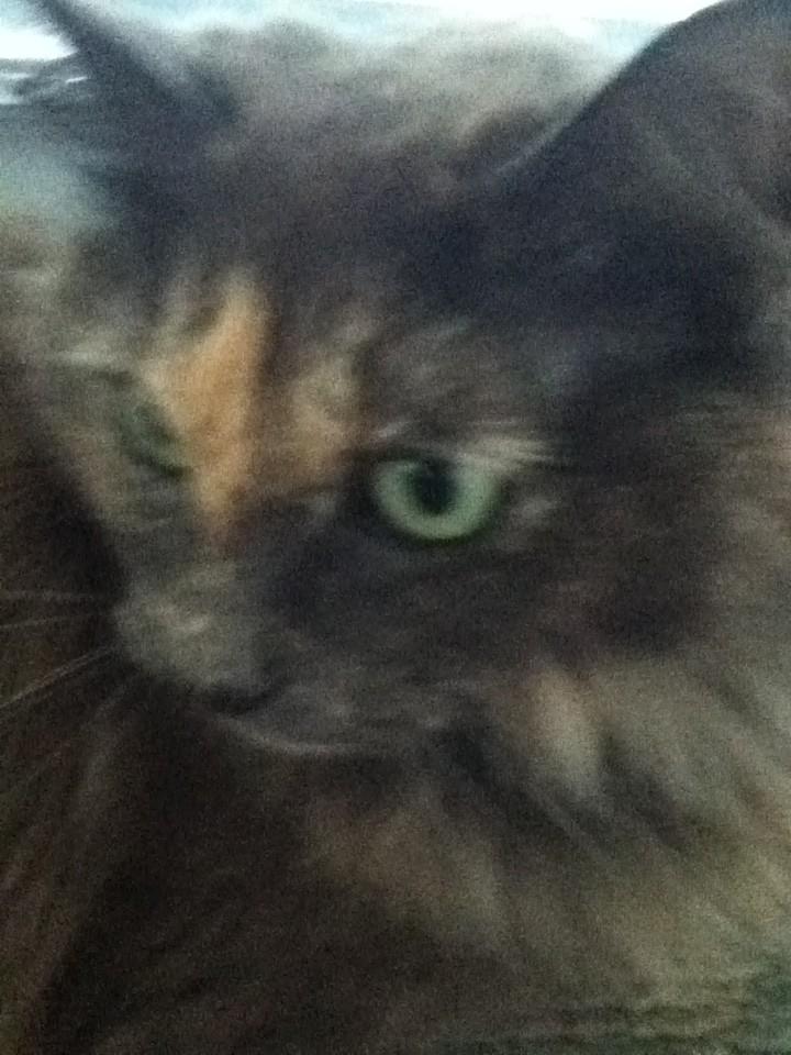 I LOVE KITTY'S AHHHhhh http://t.co/7nhdsqqC