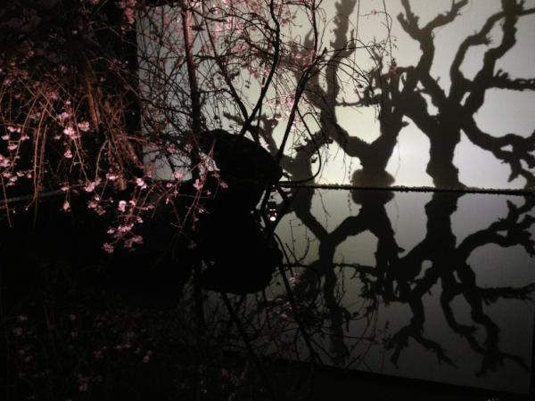 片桐功敦 (@mondebooks): 昨日からtasaki銀座での桜の...  昨日からtas
