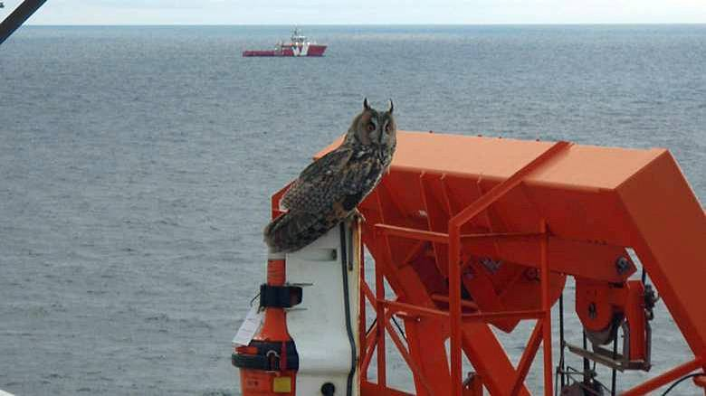 Owl visits #oil rig in the North Sea - but what kind of owl is it, do you know? http://t.co/tYOe5wVb http://t.co/gLMqt6LI
