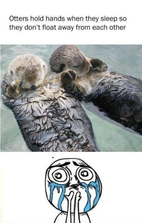 Seriously, someone be my otter? http://t.co/oIxaFGhY