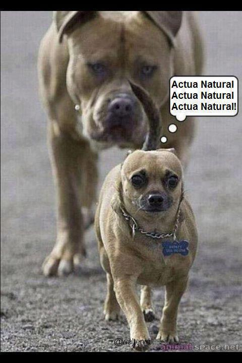 #MiMayorProblemaEs ... el animal que me viene sieguiendo!! ---->> http://t.co/JZe0fYzO