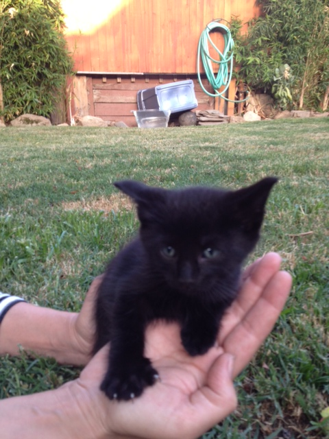 I'm bring offered this kitten. I might take him just for the witchcraft. Shall I? http://t.co/VbeZl0ga