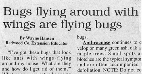 Insightful Headlines: Bugs flying around with wings are flying bugs. http://t.co/xktsOT8y