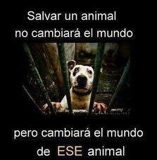 Salvar un animal, no cambiará el mundo... http://t.co/jdSOxyWH