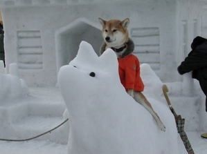 雪像の上  http://t.co/IzGtZRpP #shiba