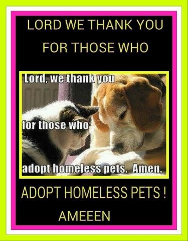 Please look in your hearts and Adopt, don't buy http://t.co/olhlveSP