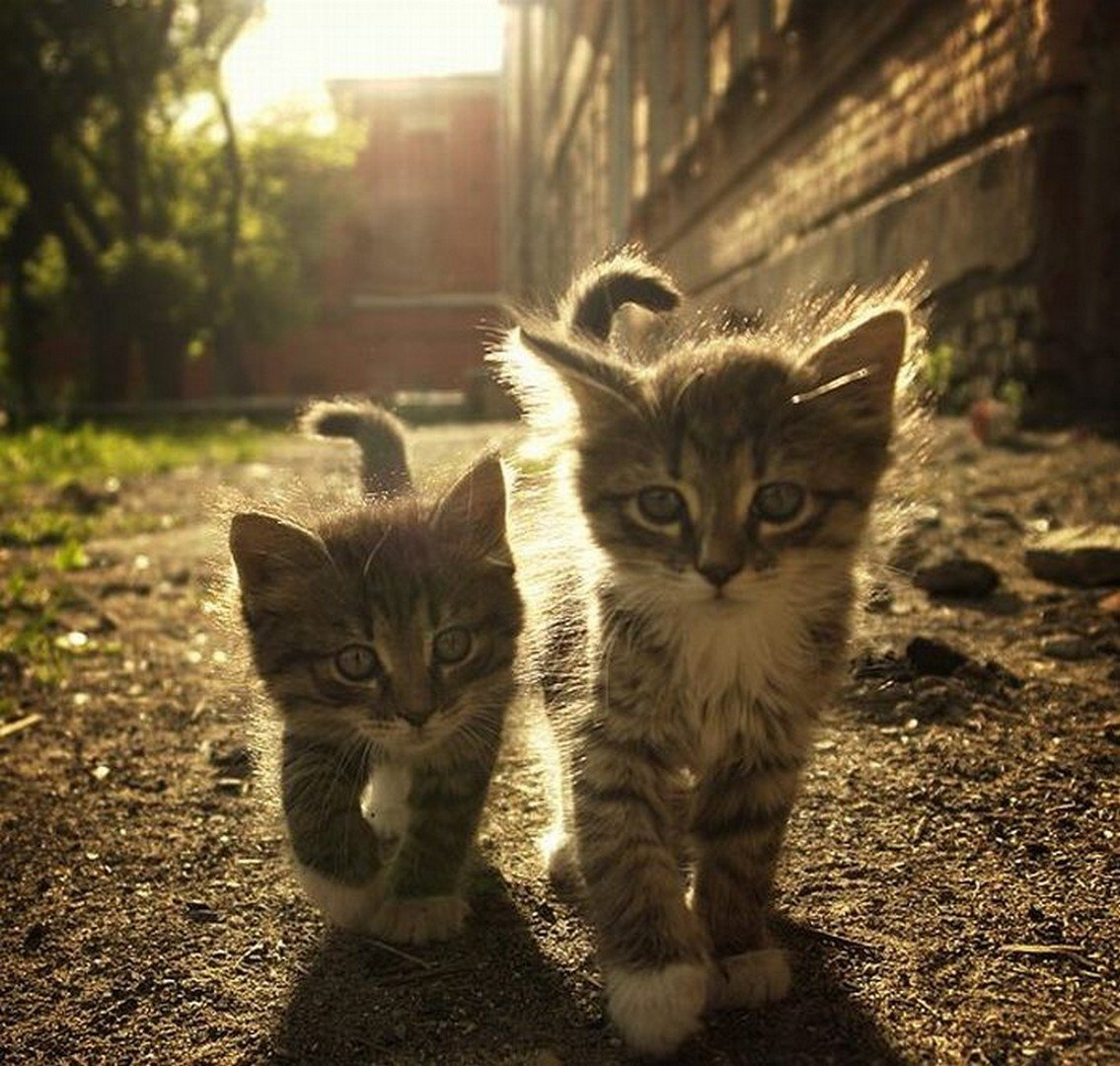 "Dawn broke, Captain Whiskers and his mysterious sidekick—known only as ""the Kitten""—had triumphed, the city was safe. http://t.co/G3uqhmc8"