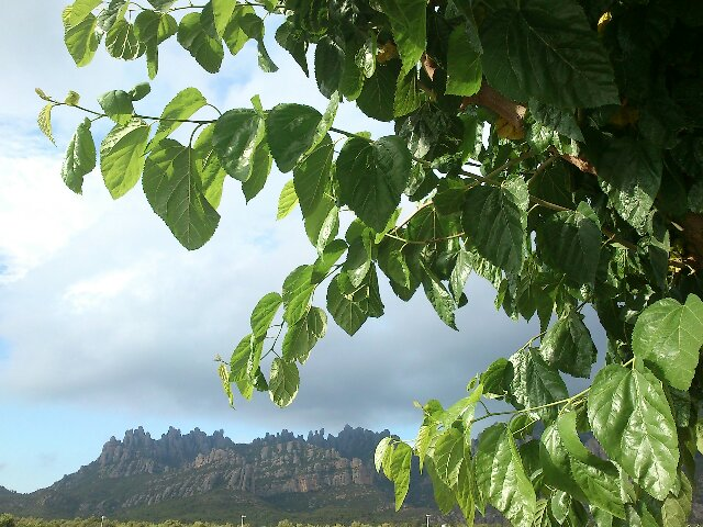 Es va tapant a #Montserrat. Cada cop més gris el #cel. #Méteo #arameteo #núvols http://t.co/zve0gjHm