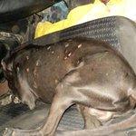 Hasta donde c tiene k llegar pa q las autoridades escuchen el maltrato d los animales,baleado en cadenas r/a zapotal http://t.co/x0gQhQrzSp