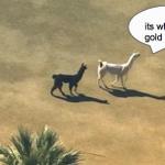 white llama has spoken http://t.co/ycGkpCmgGW