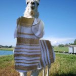 Is everyone happy now? Image by @Jamesco #llamadrama #whiteandgold http://t.co/poS25aetAa