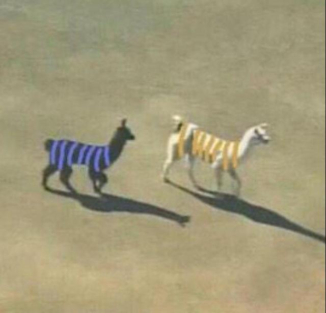 Let's move onto Llamas. They are way cuter. #TheDress http://t.co/S7SvQOZ7DF