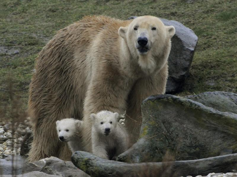 Hallo wereld, we zijn buiten! #ijsbeertjesBlijdorp  https://t.co/hKKqR9PsJ1 http://t.co/wDgMlysnpK