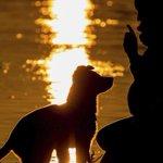 ¿Por qué tu perro confía en ti? Imperdible nota para los #DogLovers » http://t.co/L6FXTUCl3E http://t.co/Vq7BgAEv6q