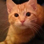 Entonces, segun vosotros mi gato es negro y azul no? Iros a cagar 🗿 #TheDress http://t.co/AQsgiyxnCW