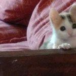 FOTOS | Rescatista chilena logra devolver a la vida a gatita dada por muerta durante 2 días http://t.co/N89ecUTCAy http://t.co/19mOU1YinE