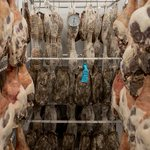 Where to buy (and store) a whole leg of wild boar in #Toronto. http://t.co/Hzx6qB8vRZ http://t.co/EhBMODuANX