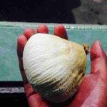 bebudak zaman sekarang mane tahu makan benda ni.  aku dulu bila belah kelape/nyo siap berebut lagi dgn adik beradik😂 http://t.co/SYqlsyprgQ